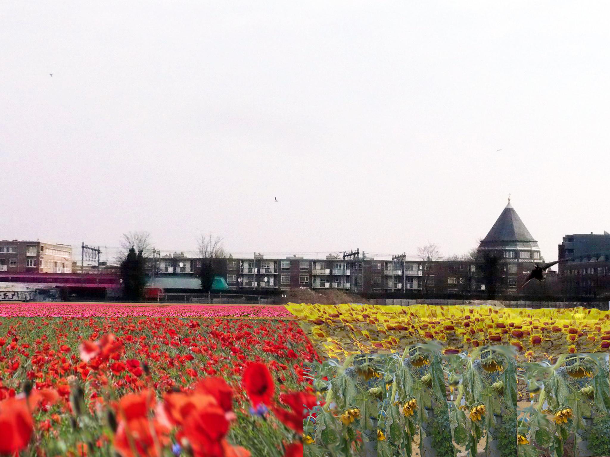 Oostpoort Veld